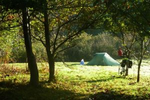 Camping in sunlit orchard at Washbourne, Blackawton Oct 2011